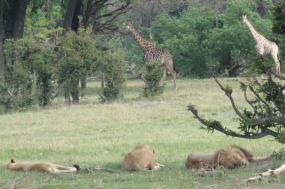 Classic Kalahari Safari tour