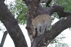5 Day Kruger Experience – Drive In tour