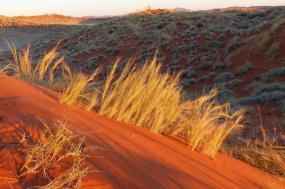 Namibia Desert and Wildlife tour