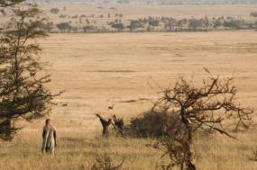 Tanzania Walking Safari - Pre Tour Extension tour