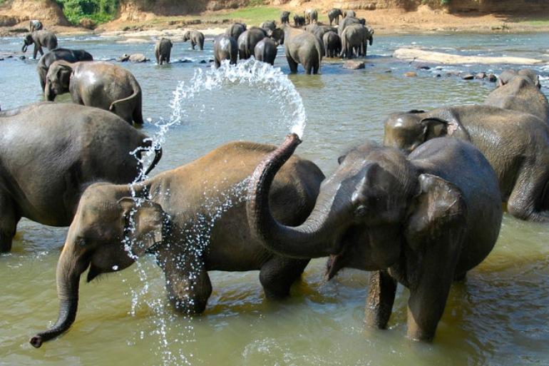 Safari Culture Iconic Sri Lanka package