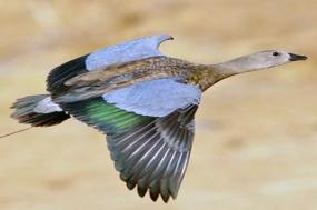 Ethiopia - Endemics Birding III 2018 tour