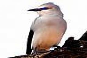 Ethiopia - Budget Birding 2018 tour