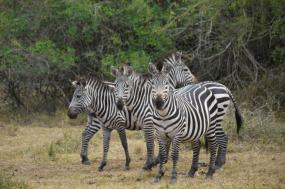 6-Day Gahinga and Virunga Safari tour