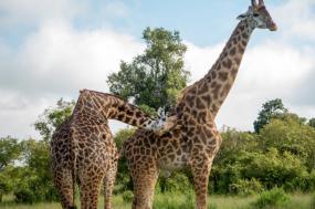Masai Mara Safari tour