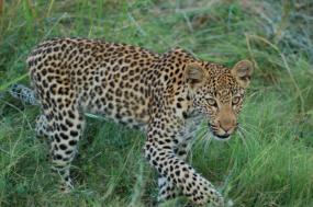 Gillian's Classic African Safari tour
