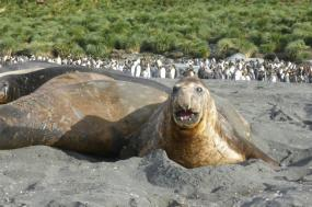 Falklands, South Georgia, and Antarctica tour
