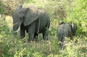 Manyara - Serengeti - Ngorongoro tour