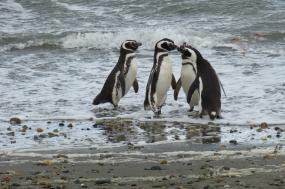 Across the Antarctic Circle