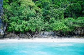 Solomon Islands Snorkeling Expedition