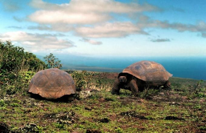 Galapagos  tour