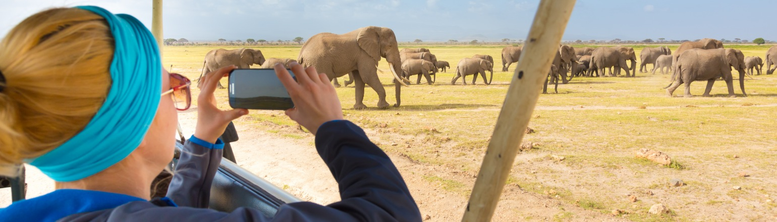 Woman taking a photo of wild elephant herd in African safari on Gate 1 tour
