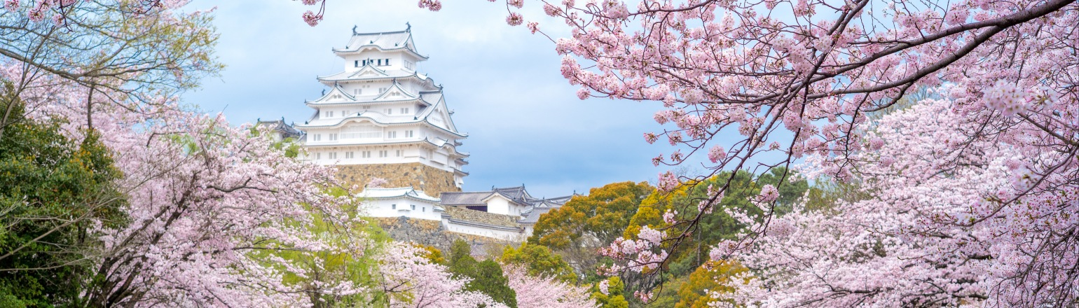Himeji Castle view during Cherry blooming festival