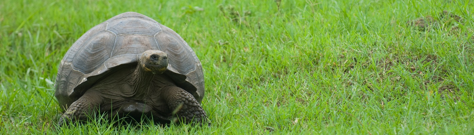 Top Galapagos travel experience, Giant tortoise