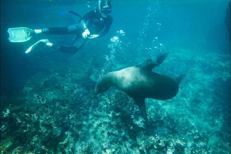 Cotopaxi Darwin Best of Galapagos  Trip