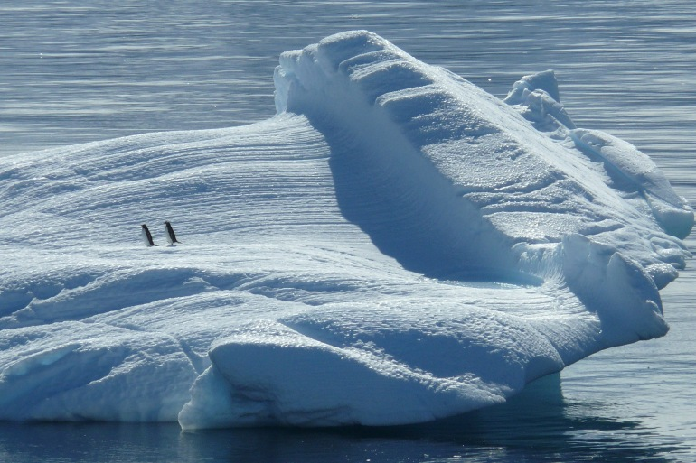 Pengiuns on Icebeg-Antarctica-329852-P