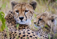 Africa 2015: National Geographic Traveler's Top Tours of a Lifetime tour