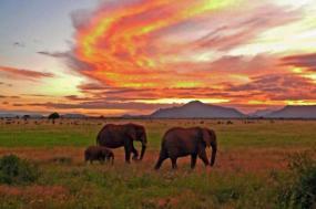 Tanzania Trekking Safari  tour