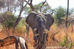 Classic Tanzania Safari tour