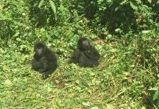 Congo Attractions