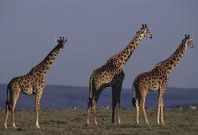 Serengeti Attractions