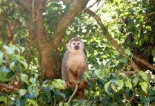 Amazon Rainforest Attractions