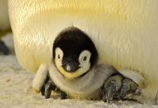 Antarctic Peninsula Attractions