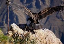Ecuadorian Andes Attractions