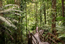 Daintree Attractions