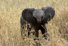 Amboseli National Park Attractions
