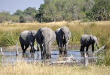 Okavango Delta Attractions