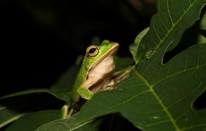 Ecuadorian Amazon Attractions