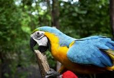 Ecuador Birding Tours Attractions
