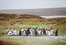 Falkland Islands Attractions
