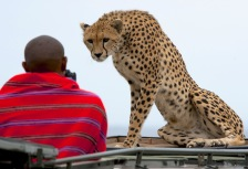 Budget African Safaris Attractions