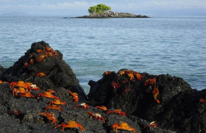 Wonders of the Galápagos tour