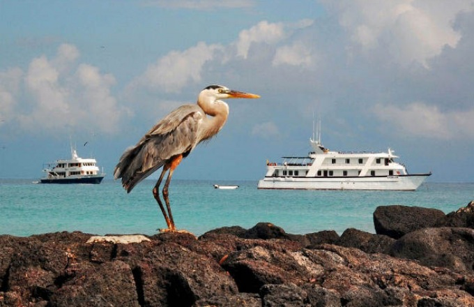 The Galápagos Islands & Ecuador tour