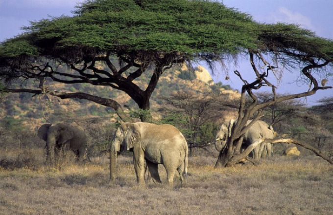 East African Explorer (29 days) tour