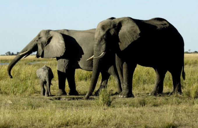 14 day family adventure to Zimbabwe tour