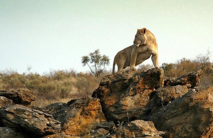 Cape Desert Safari (Southbound) tour
