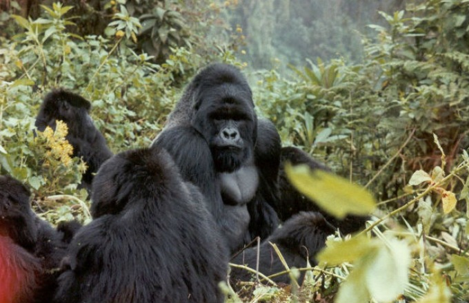 Untouched Africa: Gorillas of the Congo Basin  tour