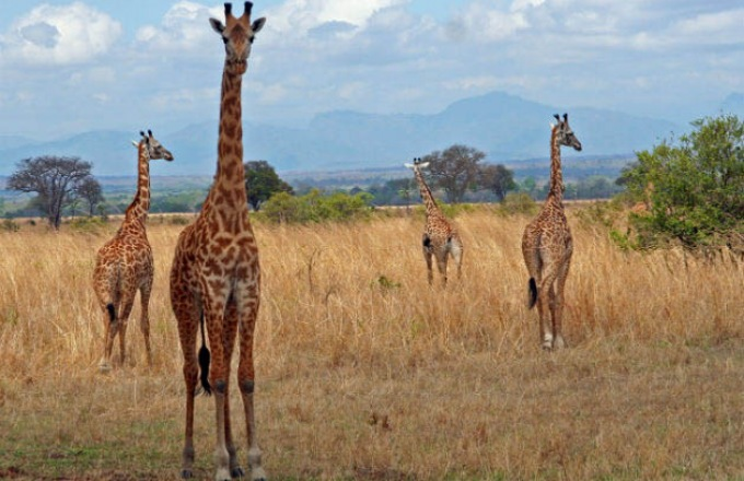 "Family African Adventure: Wildlife Encounters With Your ""Pride"" tour"