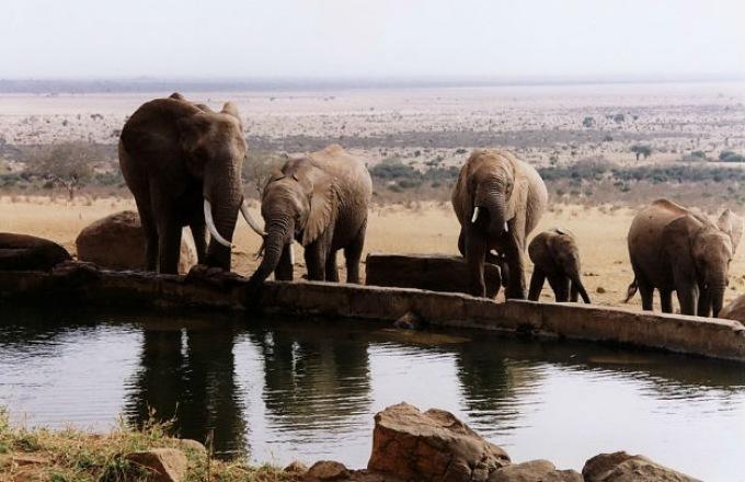 Tanzania Family Private tour