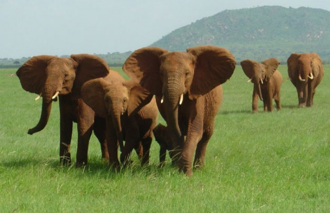 Intergenerational Kenya: Big Cats, Baby Elephants & Maasai Warriors tour