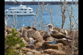 Galapagos Uncovered - Monserrat     tour