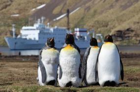 Fly & Cruise - Antarctica & South Georgia