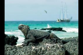 Volcanoes and Galapagos tour