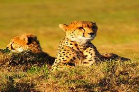 Kenya & Tanzania Private Safari with Nairobi & Zanzibar  Stone Town & Beach Stay