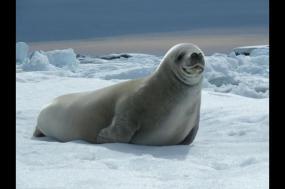 Antarctica In Depth - Expedition tour