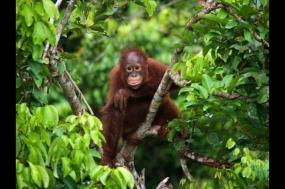 Discover Borneo tour